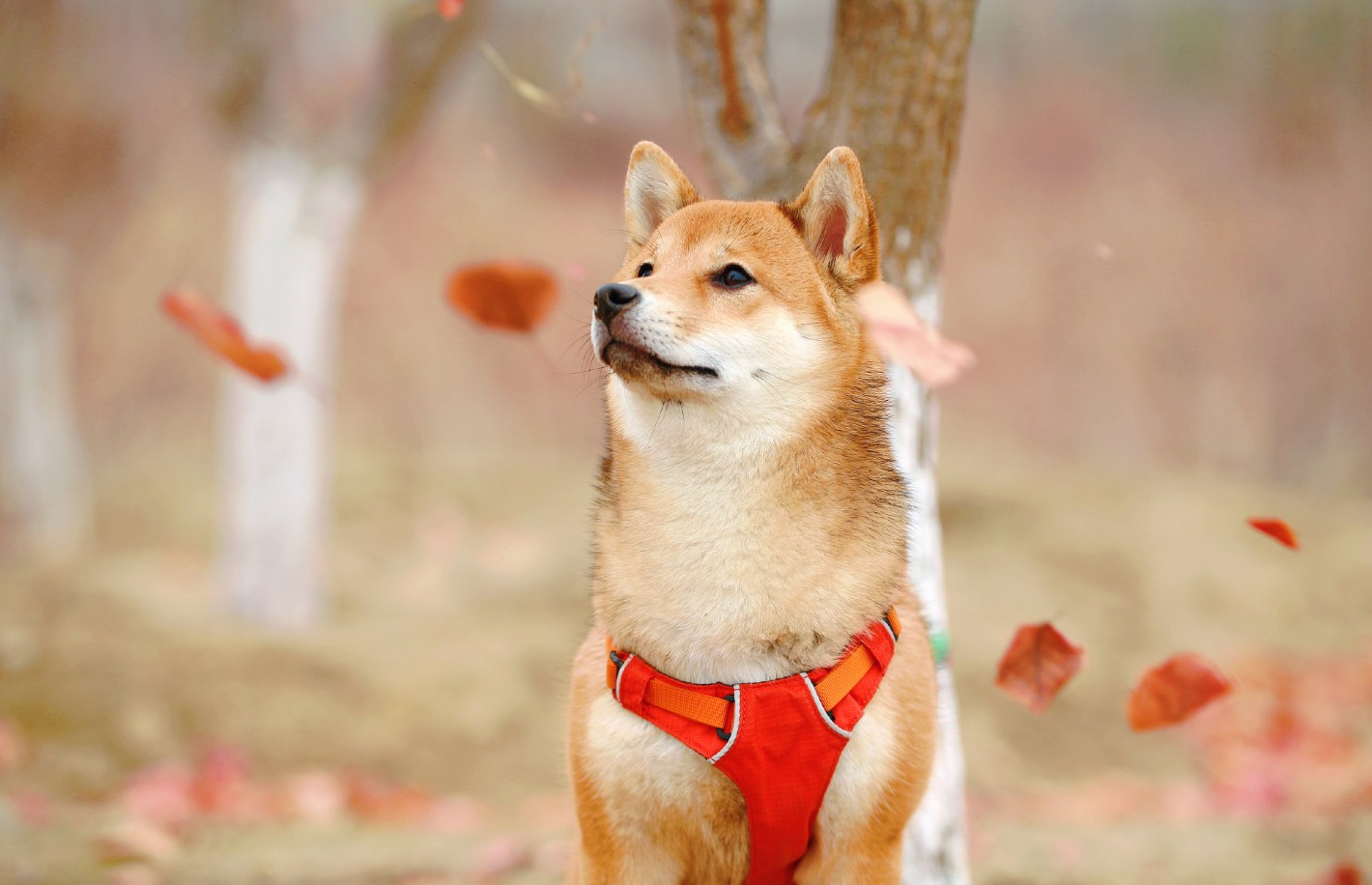 Dogecoin, Market Manipulation and the Downside of a Coinbase IPO