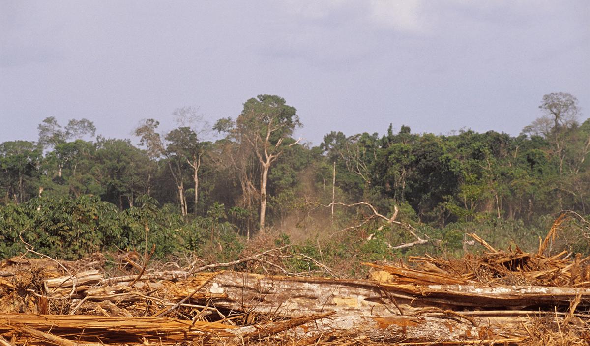 The Price of Nature | CFA Institute Enterprising Investor